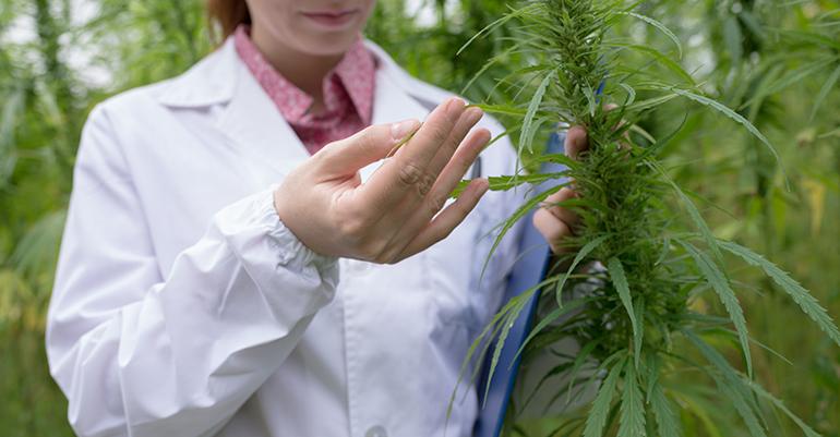 El Congreso crea una subcomisión para estudiar la regulación del uso medicinal del cannabis