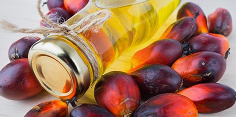 ¿Qué hay de cierto en lo que nos cuentan del aceite de palma?