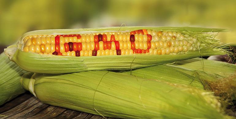 Revisión sobre los Organismos Genéticamente Modificados (OGMs)